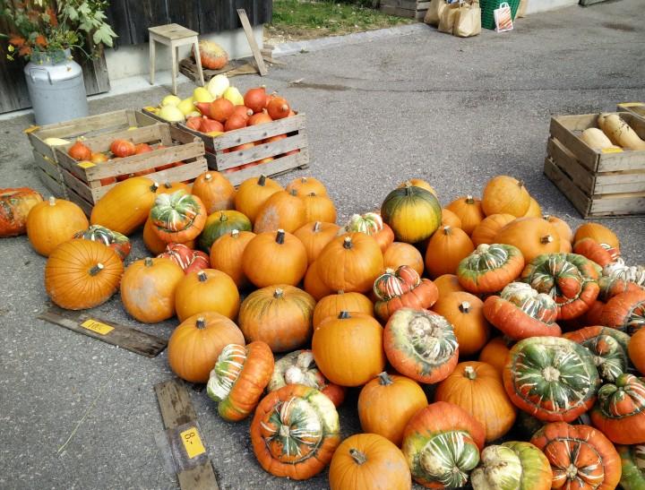 bio marche gourds