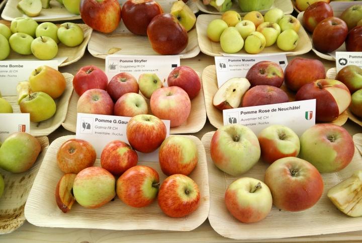 retropomme apples